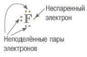 Неподеленная электронная пара - это два электрона на одной орбитали. Неспаренный электрон - это один электрон на орбитали. В образовании химической связи принимают участие неспаренные электроны