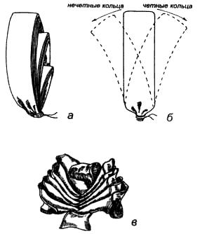 Вязание узлов. Бант «Нераспустившаяся роза» а – сделать 3 оборота на двух пальцах, 10 оборотов на трёх пальцах, 10 оборотов на четырех пальцах, аккуратно снять кольца и туго связать их внизу; 6 – поочередно снять и вывернуть внутрь все четные кольца вправо (влево), нечетные – влево (вправо), последнее же кольцо остается нетронутым – это центр «цветка»; в – готовый «цветок». Крепится к ленточному узлу на подарочной коробке.