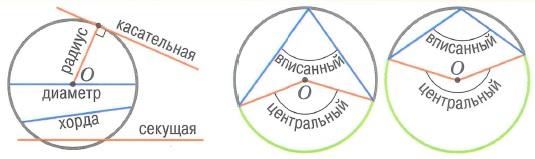 Прямые, отрезки и углы, связанные с окружностью.  Радиус, диаметр, хорда, секущая, касательная, вписанный и центральный углы. Центральный угол измеряется дугой, на которую он опирается.